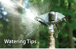 Water tips for various sprinkers type provided by A Good Earth Maintenance